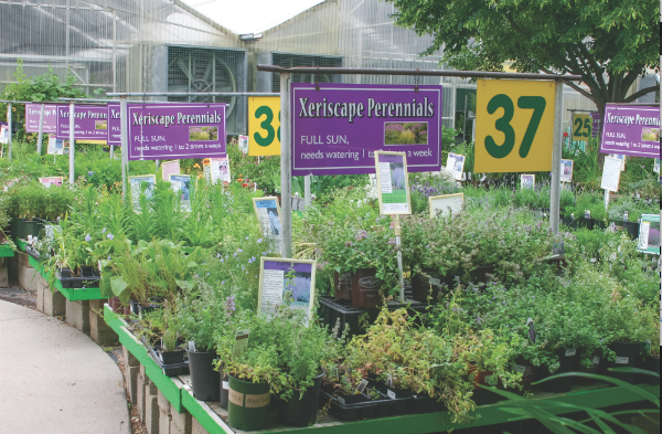 Marketing Water-Wise Plants - Lawn & Garden Retailer